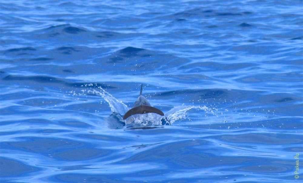 Хвост дельфина в море