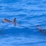 Дельфин плавает в море