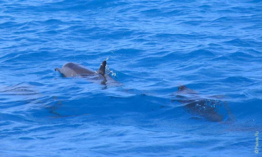 Фото дельфинов в море