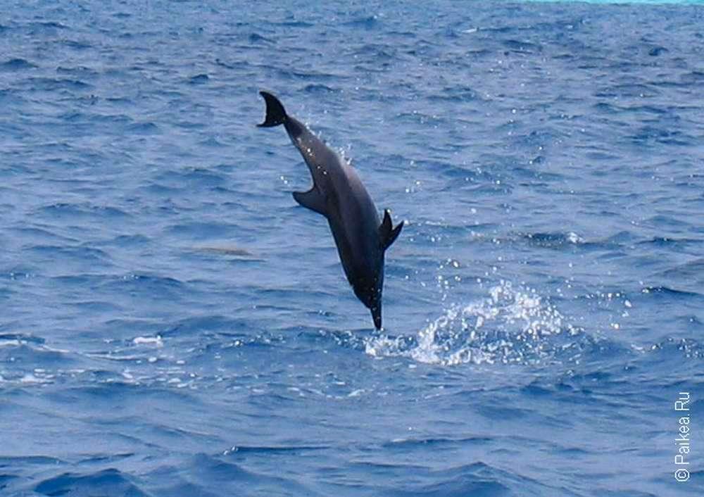 Наблюдение за дельфинами в море