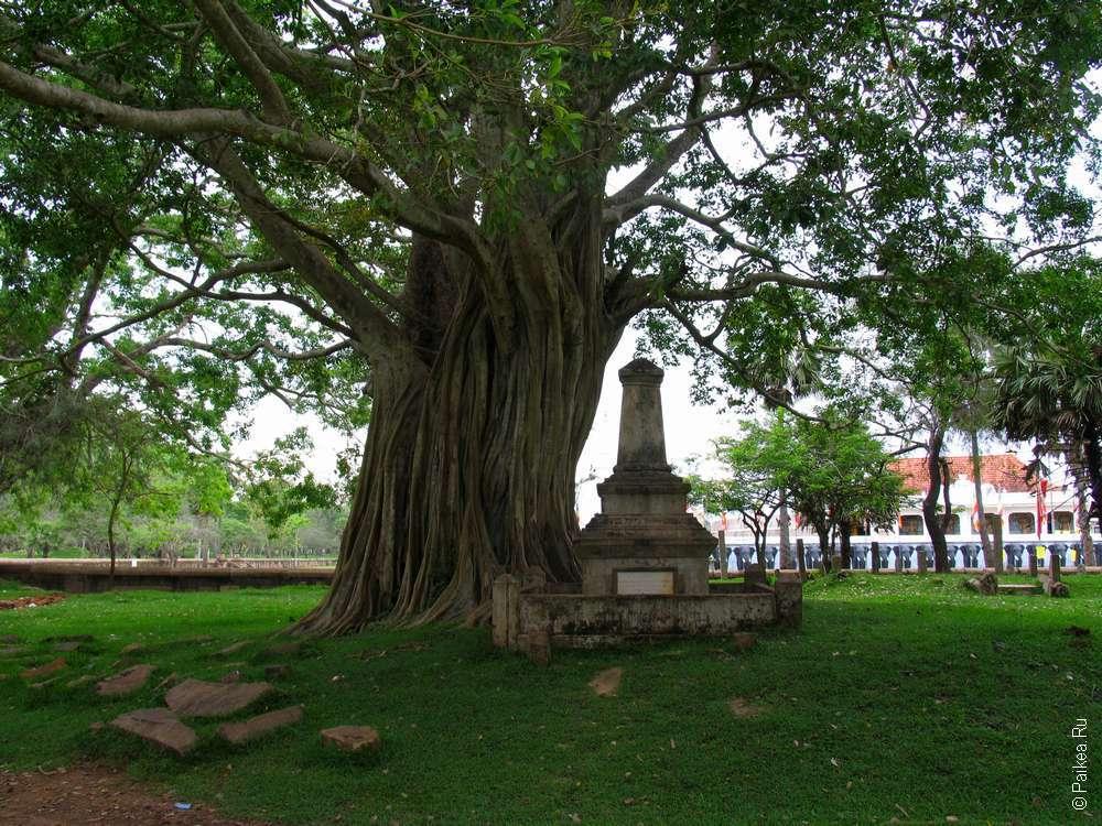 Anuradhapura - древняя столица сингалов