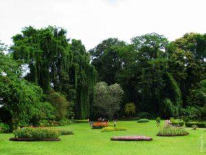 Красивый вид в Королевском ботаническом саду