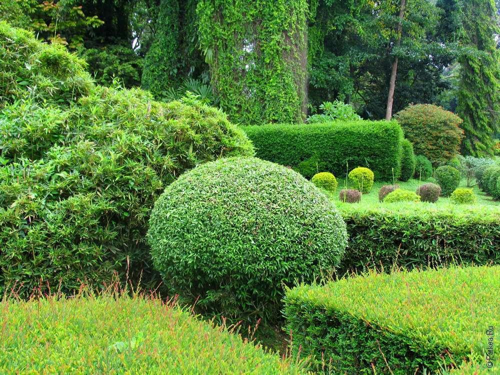 Сад Перадения в Шри-Ланке