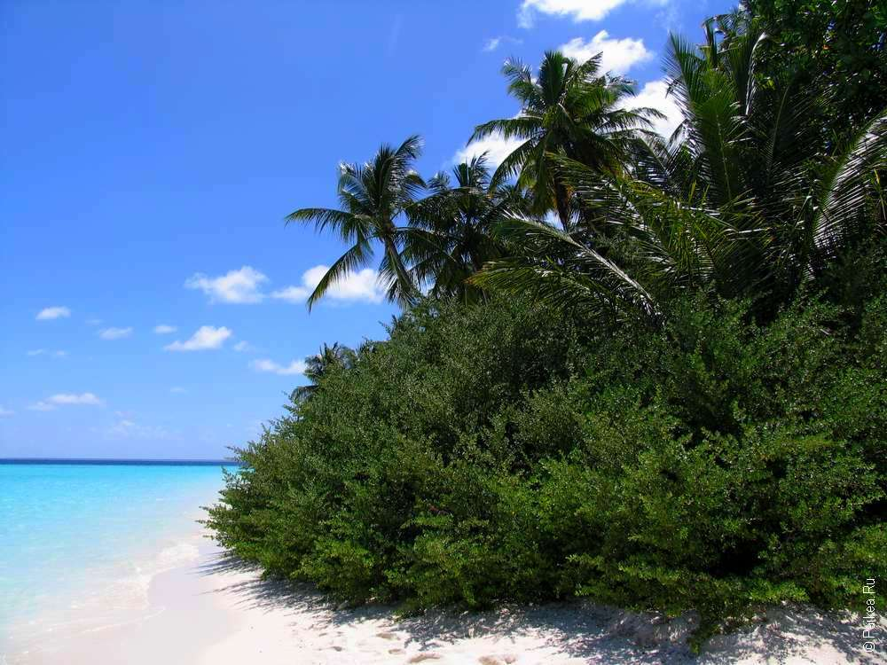 Недорого на Мальдивы