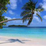 Пальма на Мальдивах