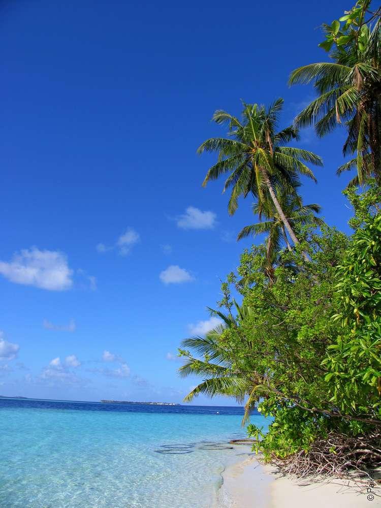 Пальмы у берега