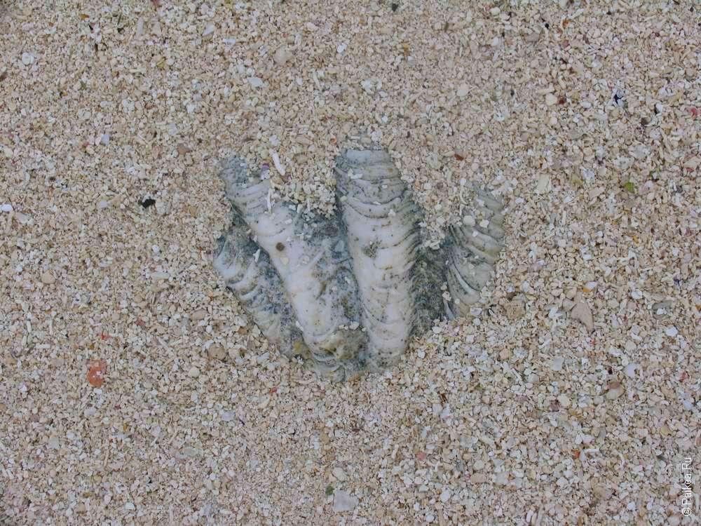 На мальдивском пляже