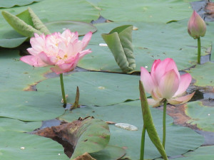 флора и фауна Шри Ланки - растения и животные