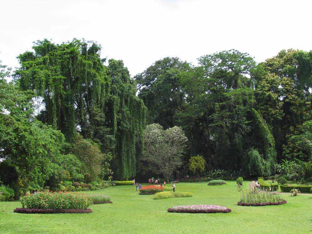 Королевский ботанический сад, Перадения, Шри Ланка (Royal Botanic Garden, Peradeniya, Sri Lanka)