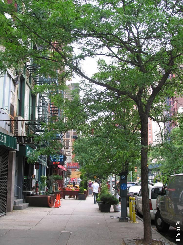 тротуар и деревья на улице в нью-йорке