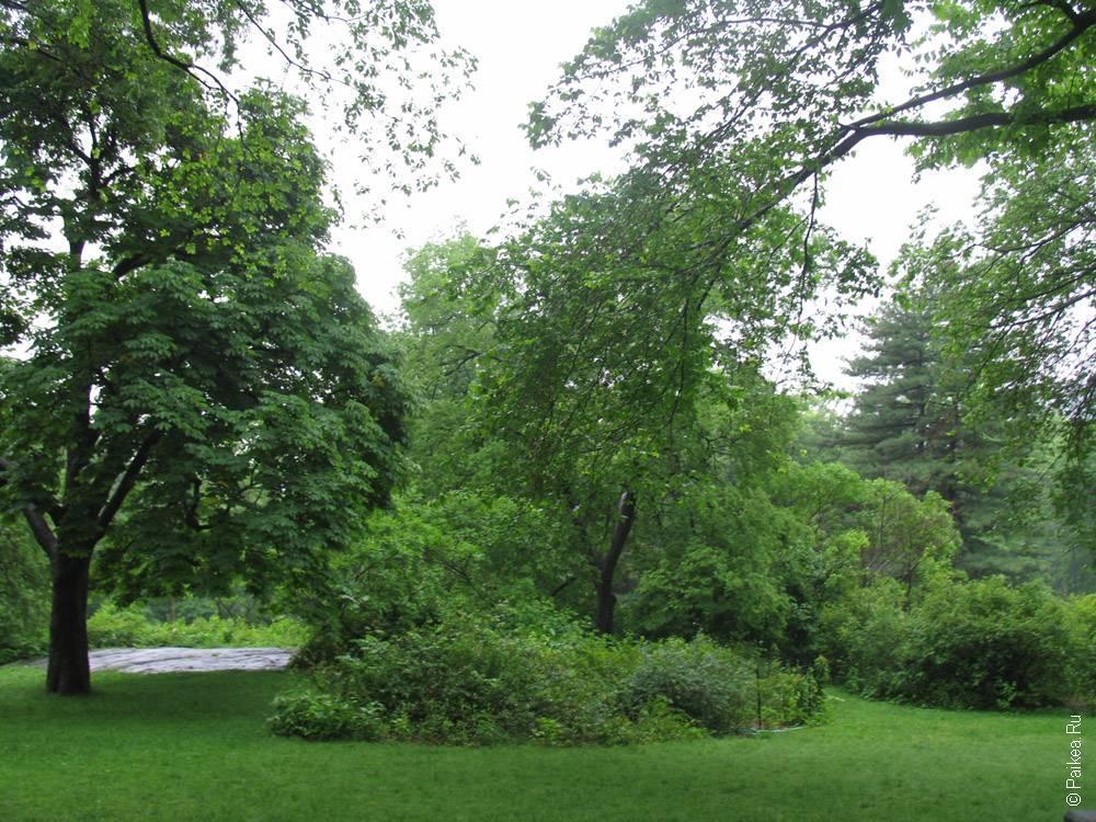 деревья в центральном парке