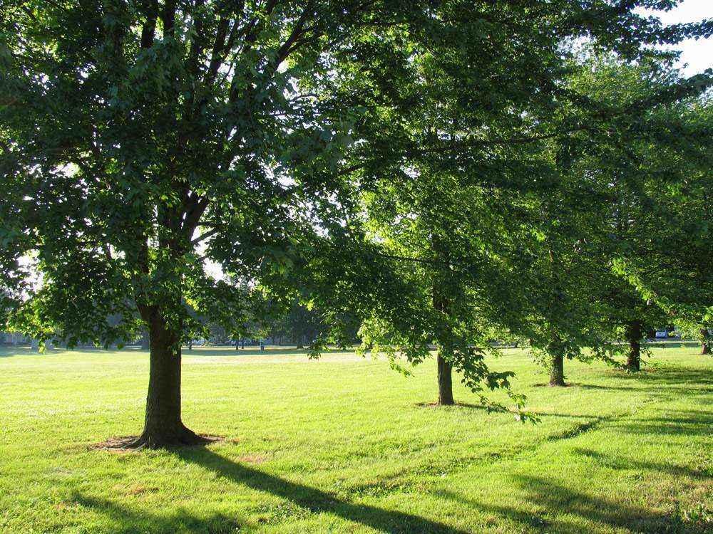 Деревья в солнечном свете