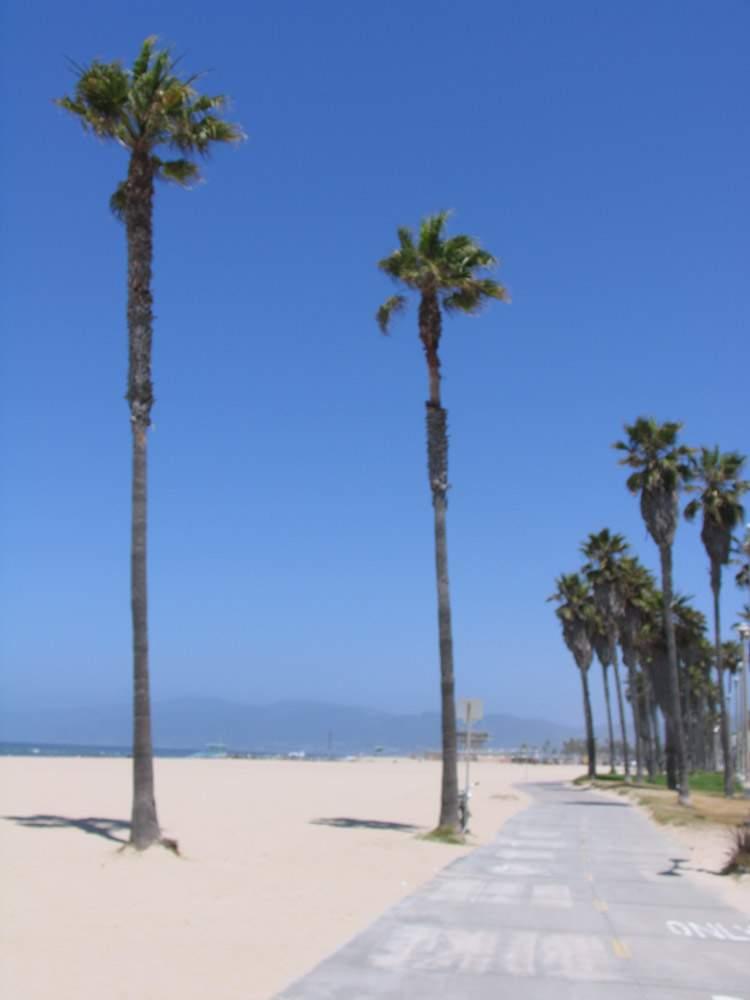 пальмы на венис бич