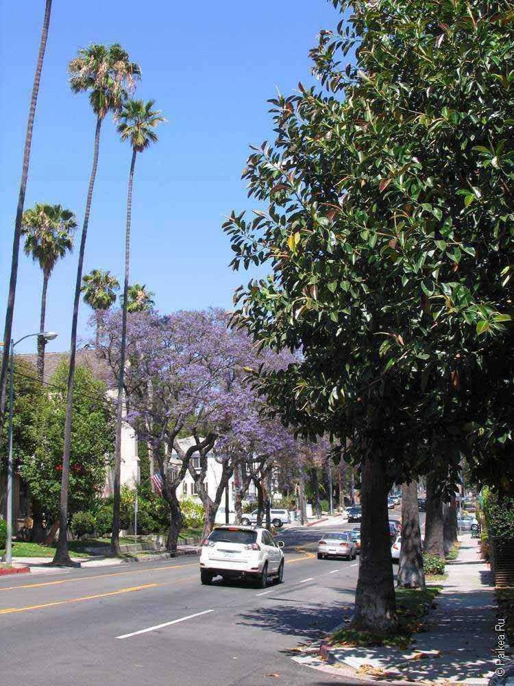 улица с пальмами в лос анджелесе