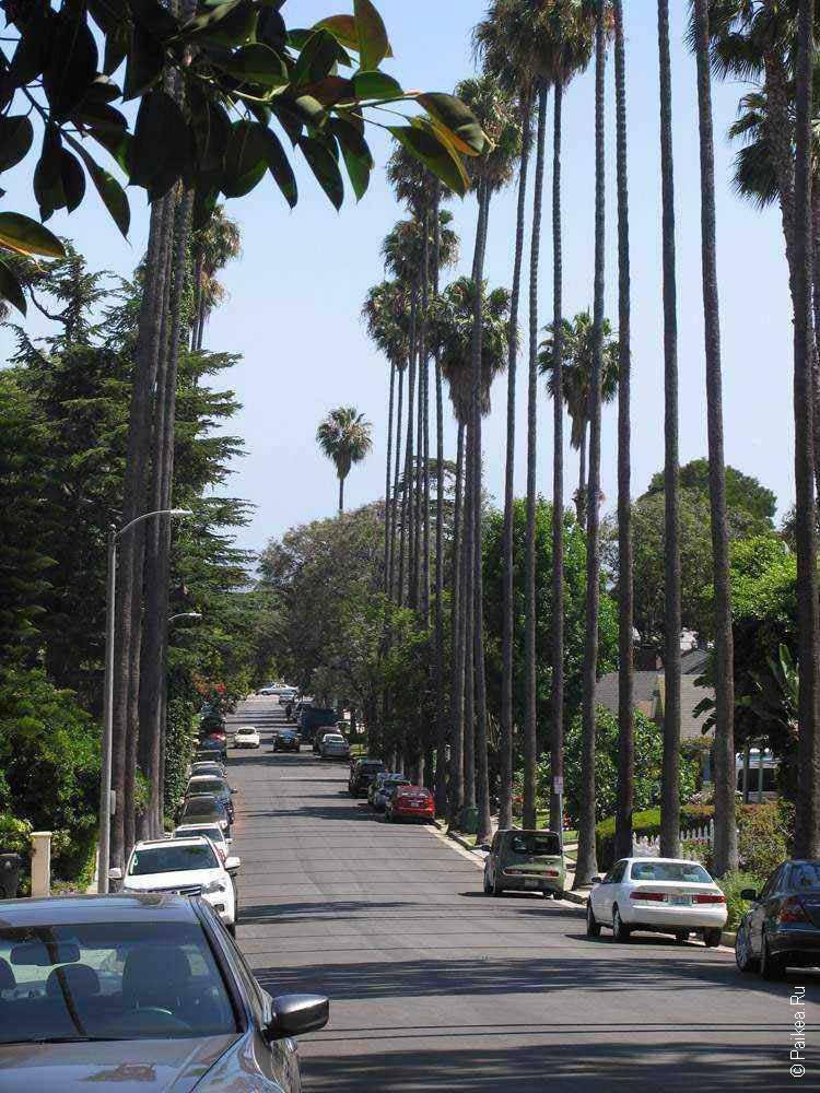 улица с пальмами в лос анджелесе сша