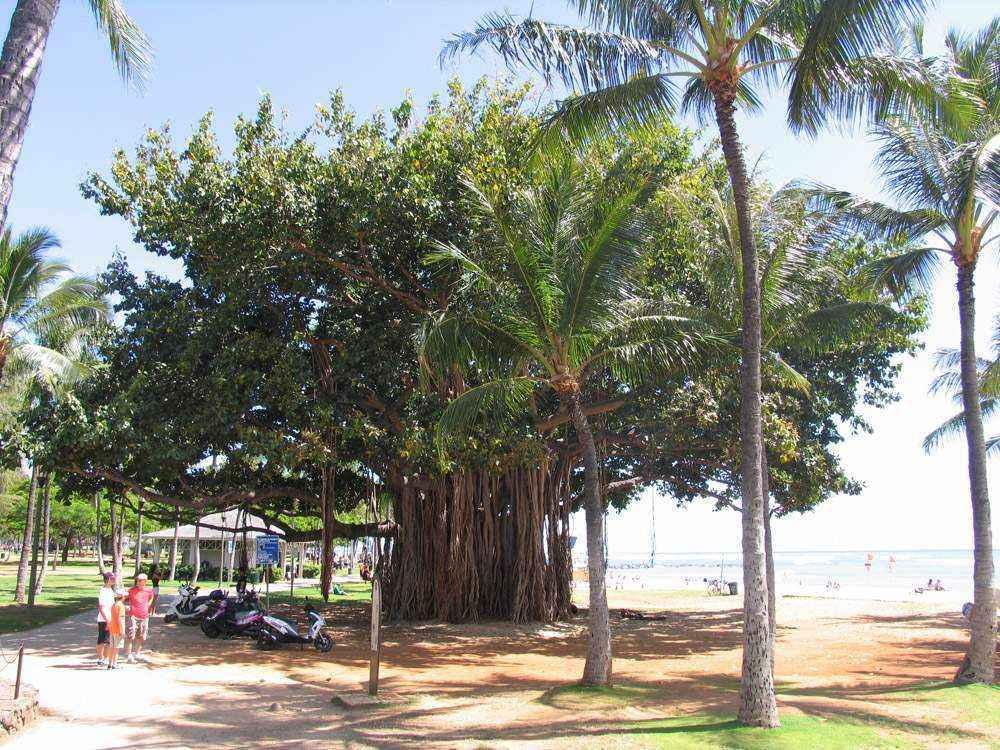 пляж гонолулу