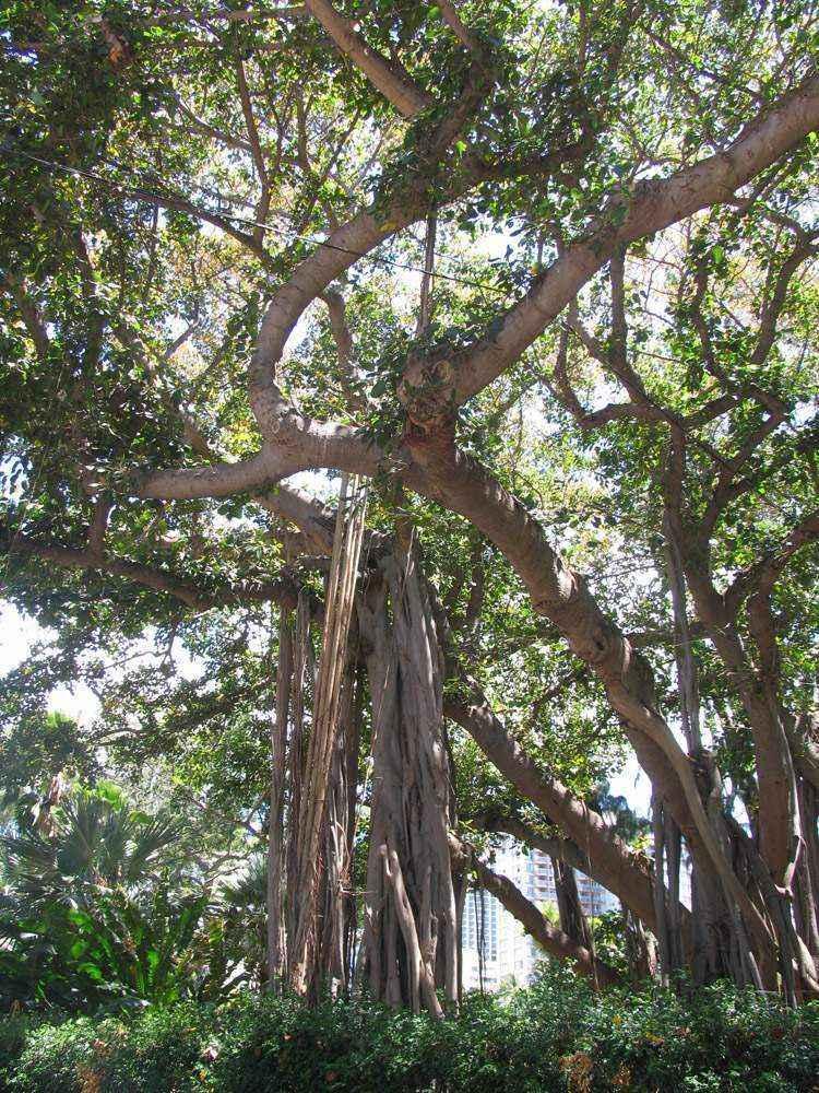 зеленые деревья на оаху