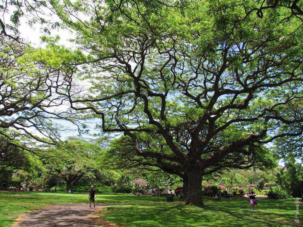 ветвистое дерево