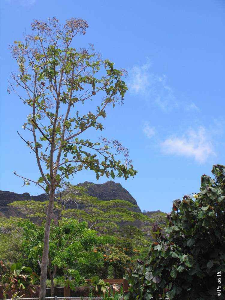 дерево на фоне неба и горы