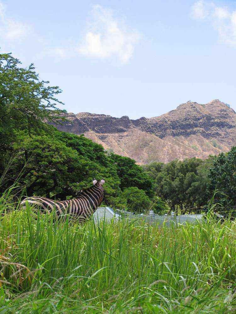 зебра на фоне гор