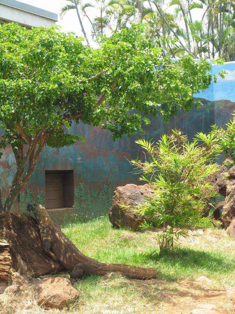 Комодский дракон на камне