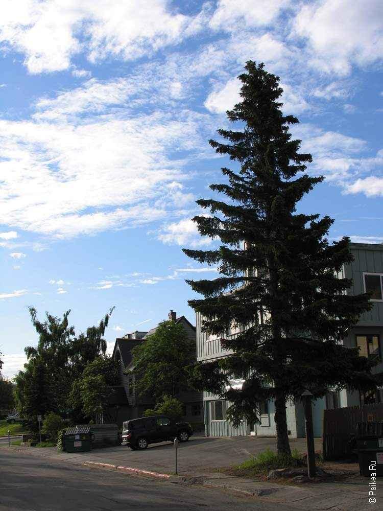 елка на улице города анкоридж