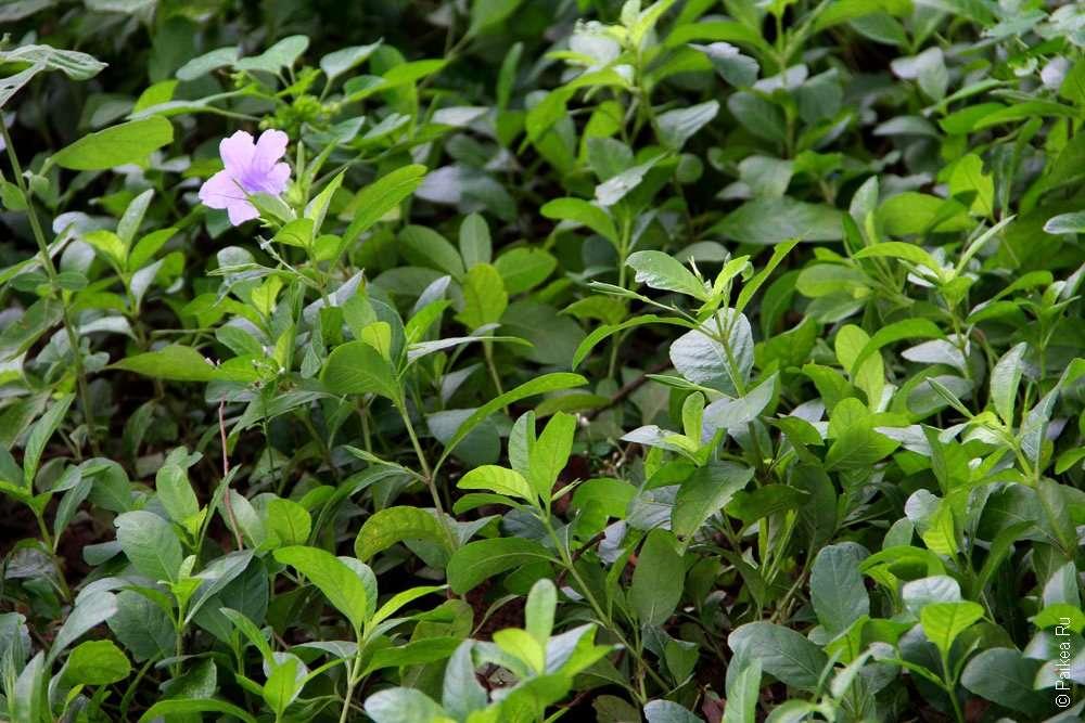 Цветы в Чоенг Эк