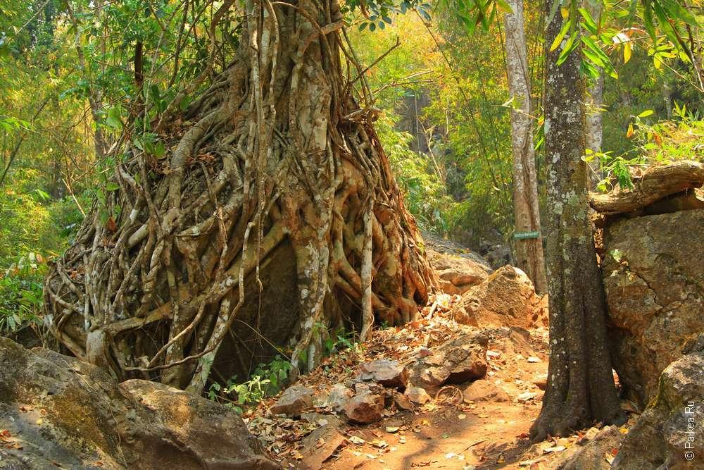 Лесной монастырь Ват Там Вуа