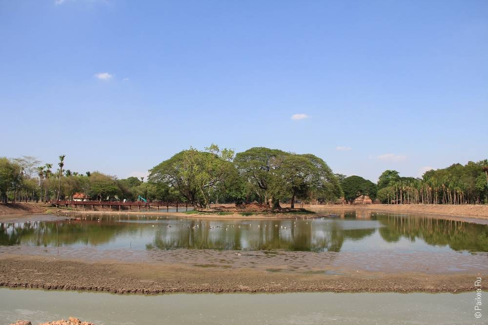 остров с деревьями посреди пруда