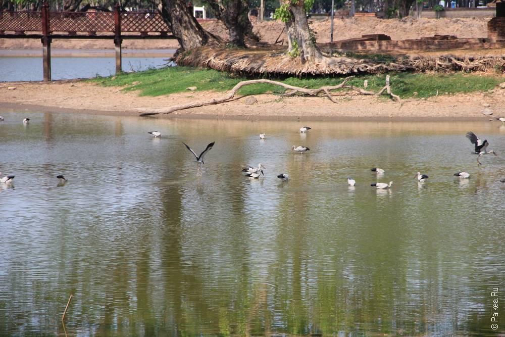 Птицы на пруду
