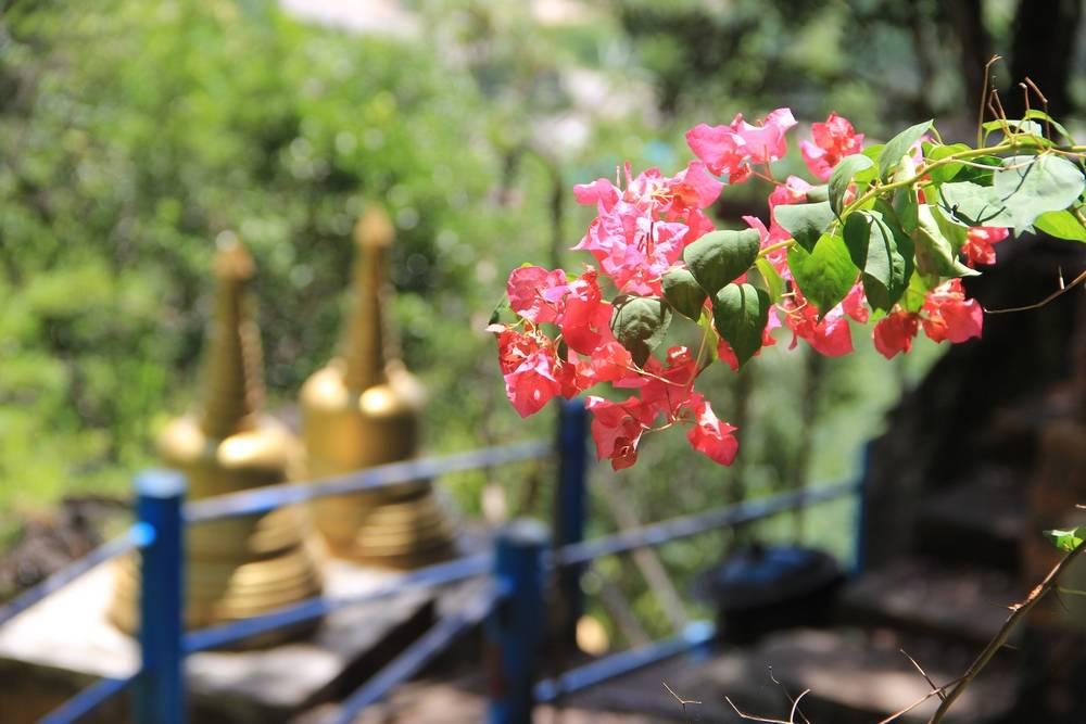 Вдоль лестницы растут прекрасные цветы