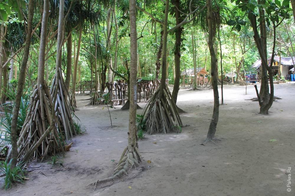 деревья с развитой корневой системой