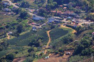 Чайные плантации в Мэ Салонге