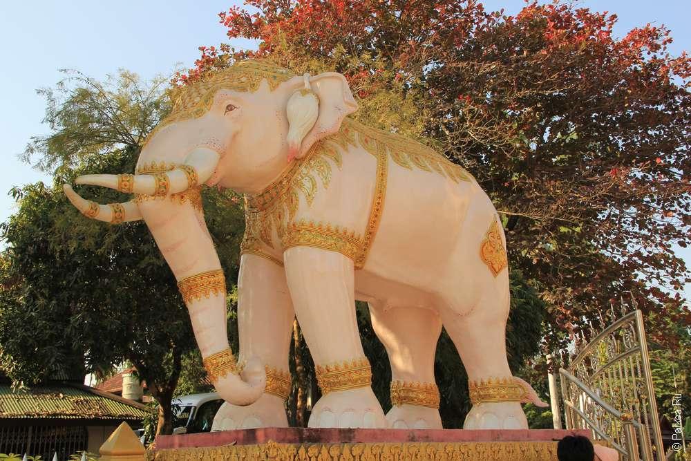 Чианг Саен слон