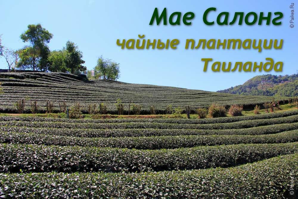 Чайные плантации Мае Салонг Таиланд