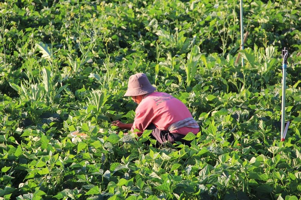 Крестьяне работают на полях
