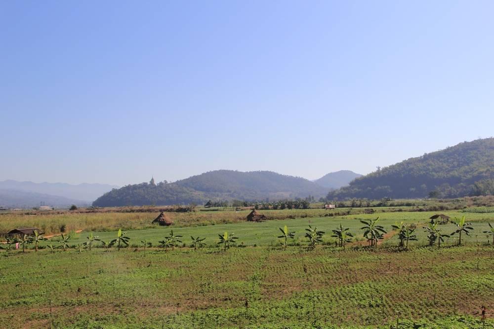 неизведанный таиланд - поля на севере