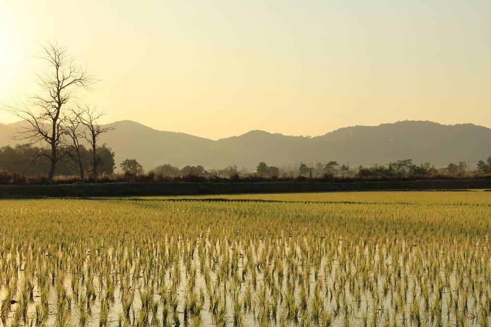 Таиланд неизвестный и нетуристический. Путешествие по маршруту Татон – Мэ Салонг – Мэ Сай – Золотой треугольник – Чианг Сэн (Tha Ton – Mae Salong – Mae Sai – Golden Triangle - Chiang Saen)