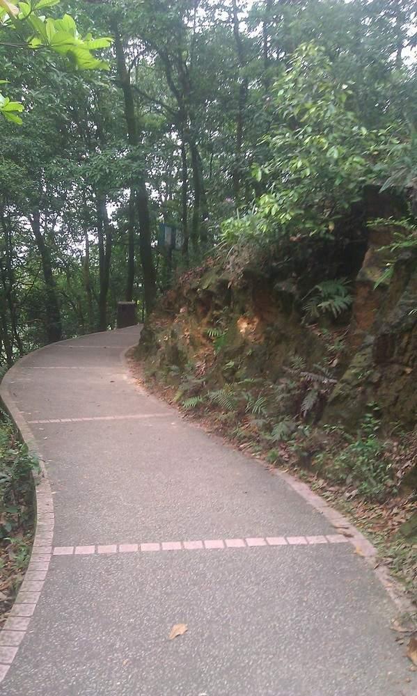 прогулочная дорожка в парке