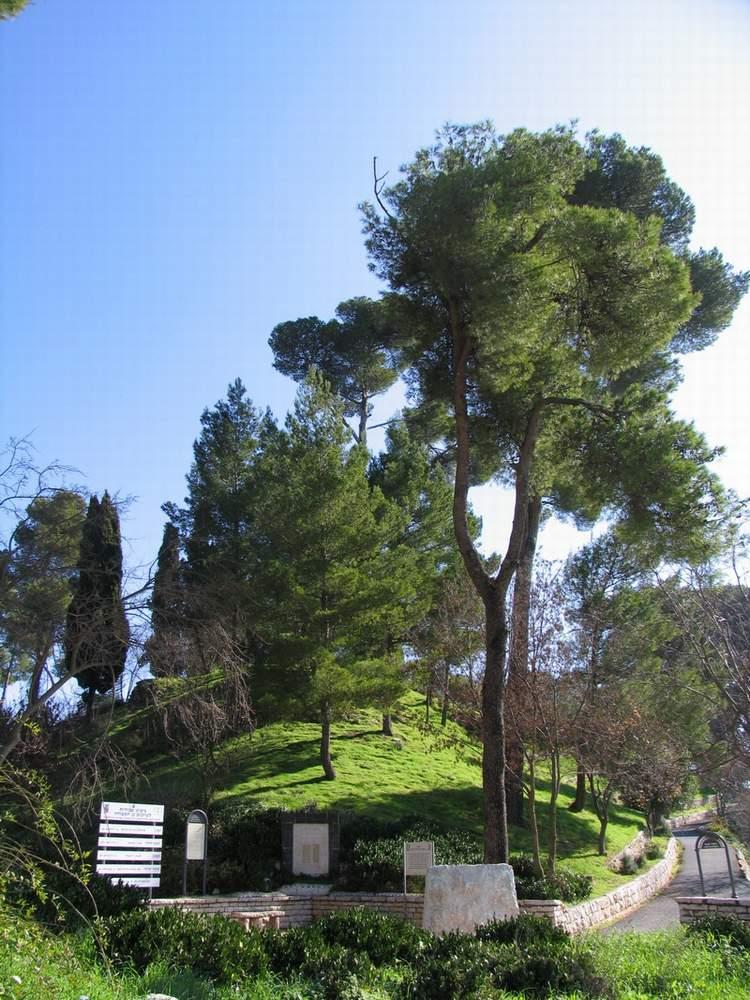 Израиль - Цфат (Israel - Safed)