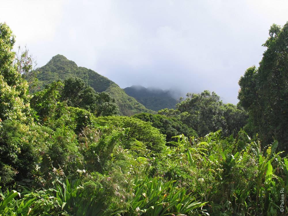 вулканические горы покрыты зеленью