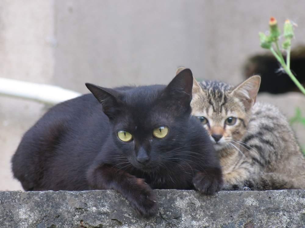 кошка со взрослым котенком