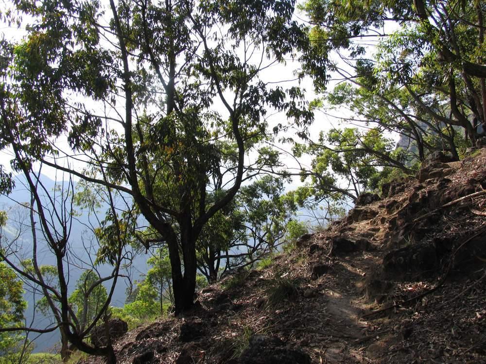 Элла Рок Шри Ланка 08