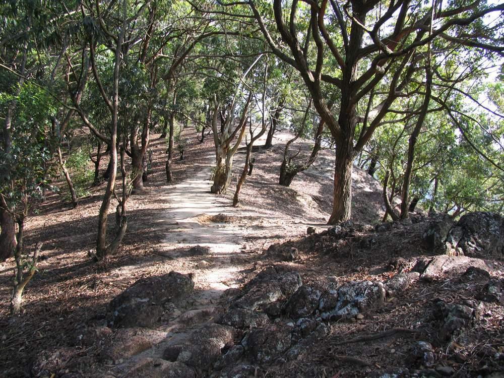 Элла Рок Шри Ланка 05