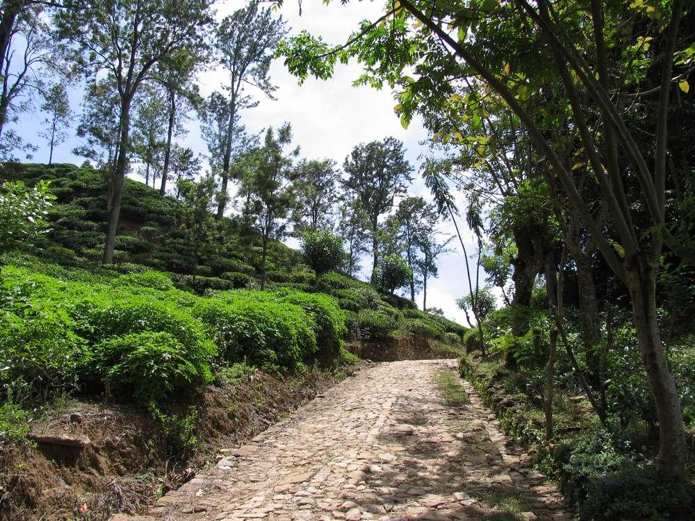 Малый пик Адама, Элла, Шри-Ланка 02