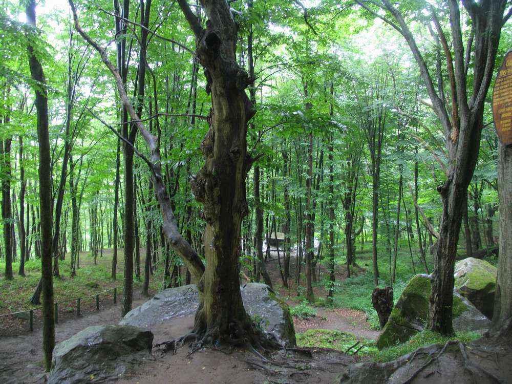 В дождливом лесу