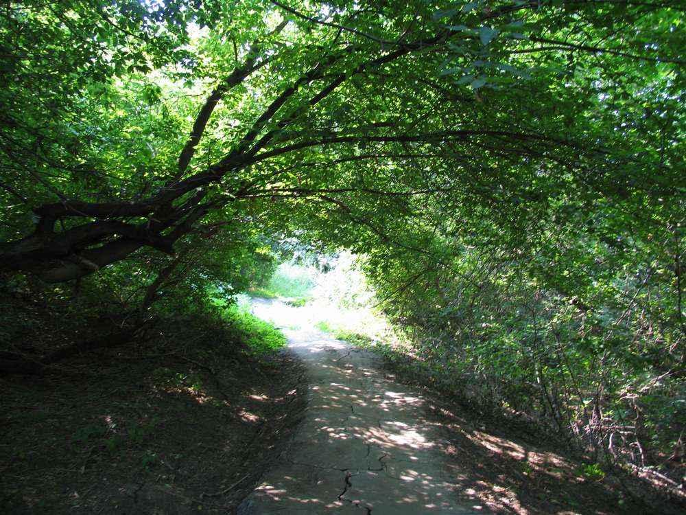 Зеленый туннель
