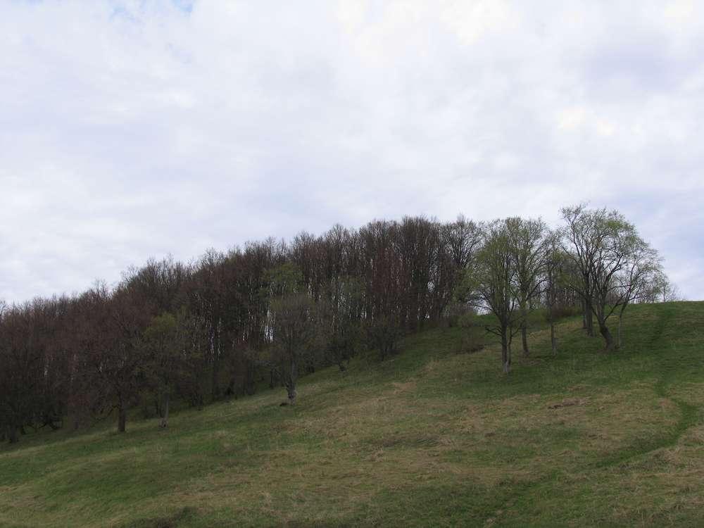 Александрова гора, она же Лысая или Ярилина