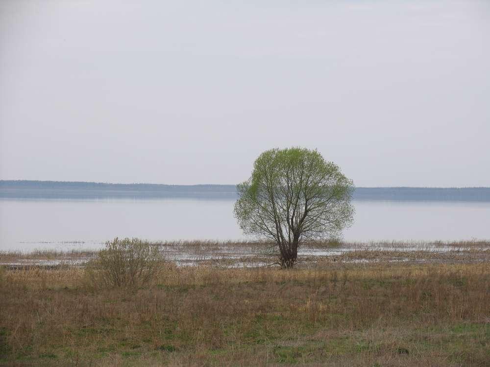 Тихие воды озера