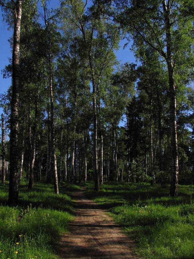 Московский лес